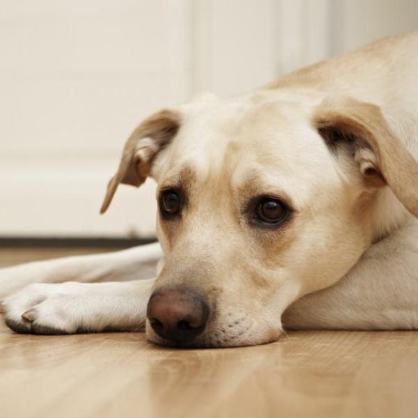 Seu cachorro está tendo dor de estômago? Nós podemos ajudar! #cachorro #cães #animais #pets