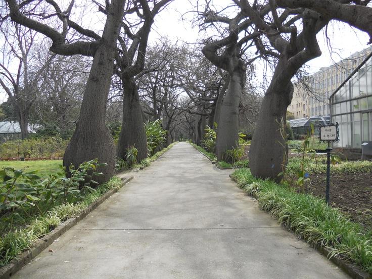orto botanico di Palermo.  marzo 2012
