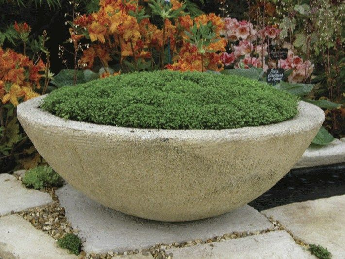 White Low Bowl Planter Unique Outdoor Or Indoor Low Bowl Planters