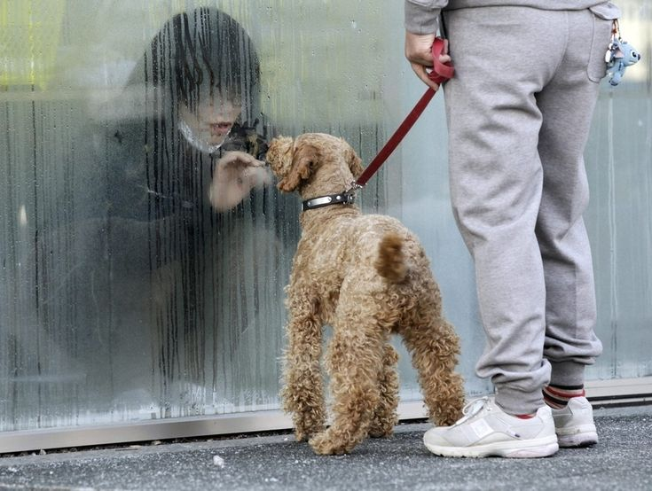 A girl in isolation for radiation screening looks at her dog through a window in Nihonmatsu, Japan on March 14.