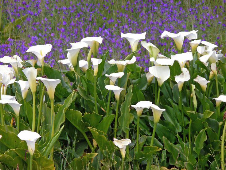 Wild_flowers_South_Africa.jpg (3456×2592)