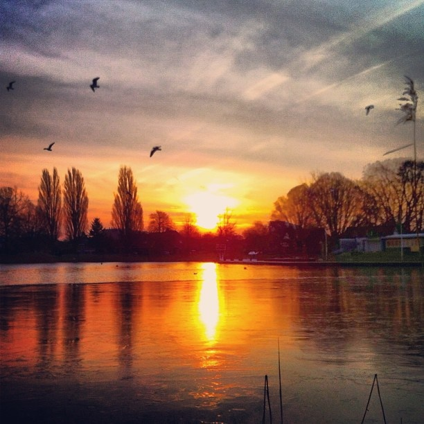 A very cold good morning with ice on lake Tuindorp Hengelo Twente Holland - @marcel_tettero- #webstagram