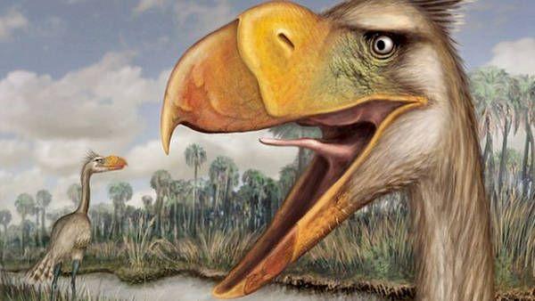 """Los restos fósiles de un enorme """"ave de terror"""" carnívora fue encontrado casi completo en Mar del Plata."""