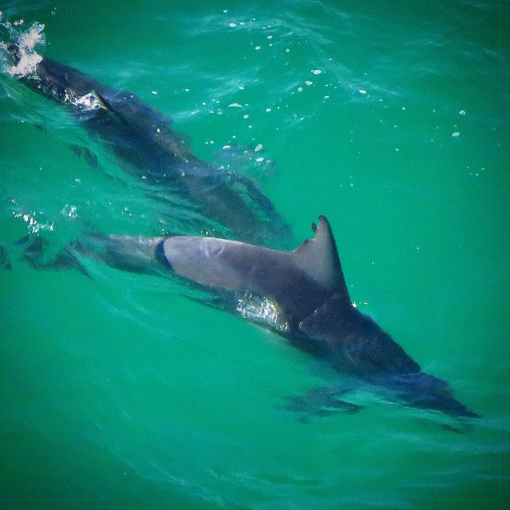 Dolphins on yesterday's Byron Bay tour