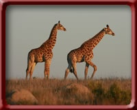 Lalibela Game Reserve, South Africa.  Sooo Amazing!!  Great safari drives and spoiled the whole time:)