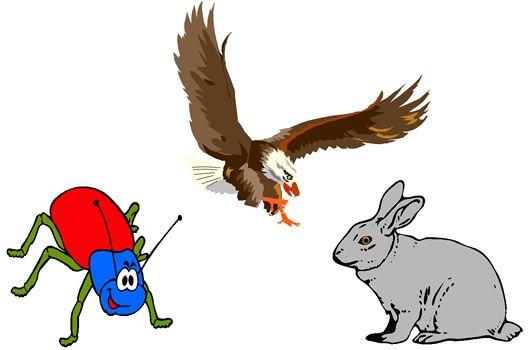 El águila y el escarabajo http://www.encuentos.com/fabulas/el-aguila-y-el-escarabajo/