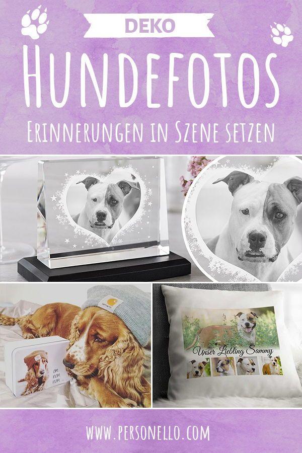 Du hast tolle Hundefotos von deinem treuen Begleiter und möchtest ...
