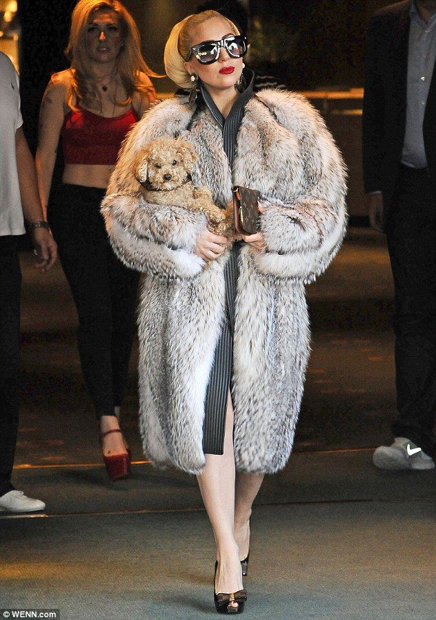 Feeling cold? Lady Gaga steps out in Bulgaria wearing a large fur coat and carrying a small dog
