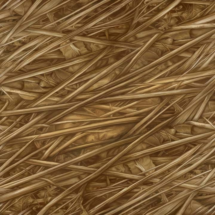 Ground_DEAD_GRASS_texture_sample1.jpg (720×720)