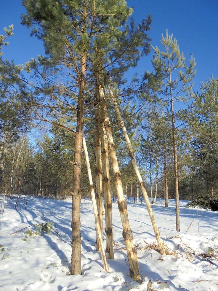 Напоминаю, что 26.февраля нужно рубить дерево на инструмент.  Описывал свод правил рубки дерева - https://vk.com/wall3305534_8519  Обязательно нужно пометить — не помеченное неизбежно теряется и забывается.
