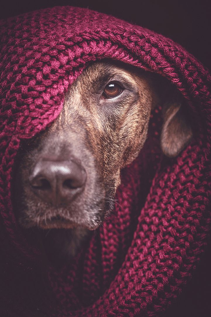Photographer Elke Vogelsang brings out the personality of dogs in heartwarming and often humorous portraits.