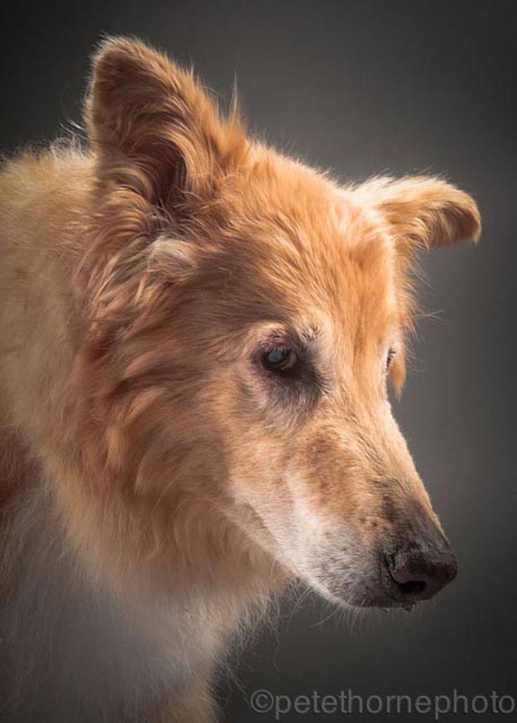 Clovis, 14 años  Old Faithful: Conmovedora Serie de Retratos de Perros en Avanzada Edad | FuriaMag | Arts Magazine