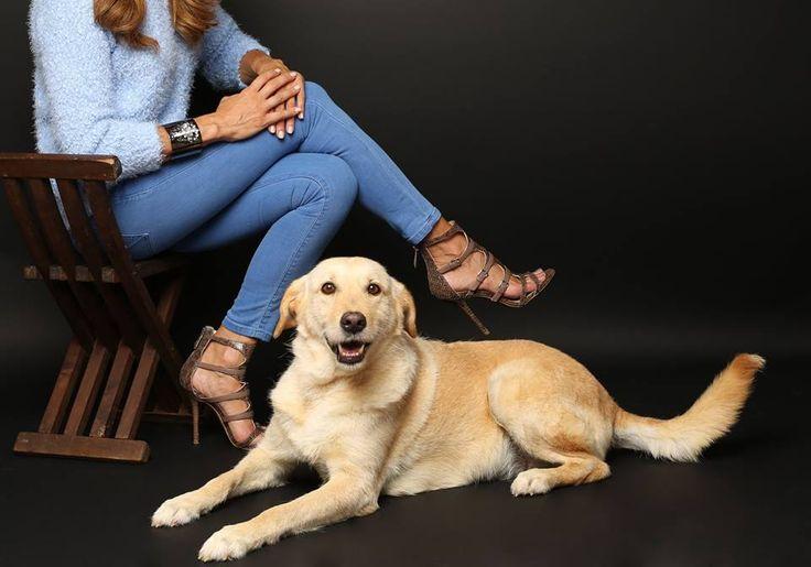 www.polivoxportugal.com  Polivox Portugal & Be My Dear  Quem quer levar esta cadelinha para casa?