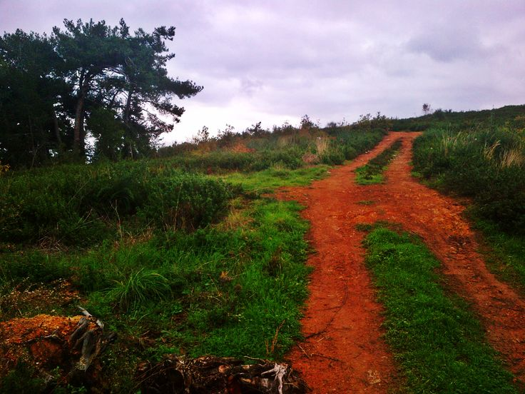 cloudy and rainy november day, path, pine trees