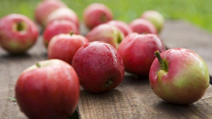 Rødding I Æblets By I Smagsoplevelser | VisitSkive
