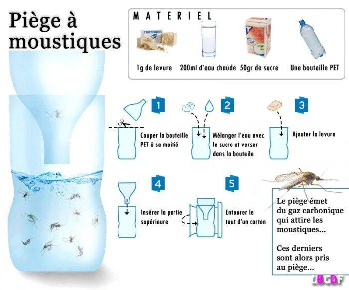 Piège écologique pour moustiques et mouches