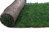 Buy premium grade turf and topsoil online from the UK's leading family-run turf suppliers. Suppliers of Turf  Topsoil for over 40 years in Essex. http://paynesturf.co.uk/