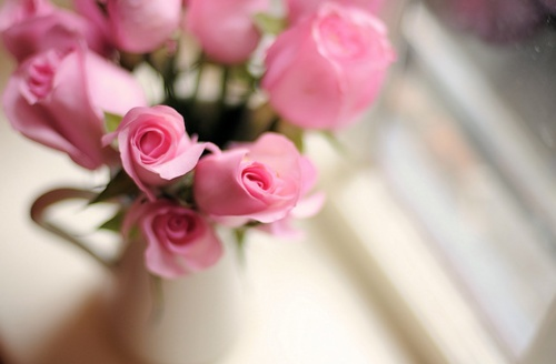 lovely pink roses: Pink Roses, Things Pink, Pink Minis, Pretty Pink, Pretty Roses, Pinkie Swear, Minis Roses, Flower Power, Pink Nature