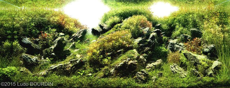 580 2015 aga aquascaping contest entry see more 1 2015 aga aquascaping ...