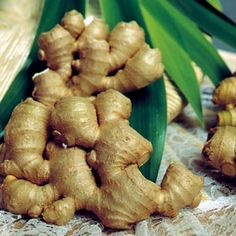 It is reported that ginger is a far better alternative in treating vertigo than acupuncture, according to the March 2006 issue of The Journal of Traditional Chinese Medicine. National Institutes of Health further validates this claim—powdered ginger root significantly reduces vertigo. Ginger is a great culinary spice—add sliced ginger to stir-fry, add grated ginger to desserts, cookies , soups or marinades. Make ginger tea by steeping freshly sliced ginger to stir-fry.