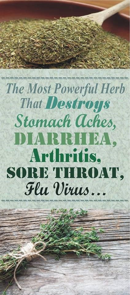 Ever whonder about natural remedies and the power of herb read more about The Most Powerful Herb That Destroys Stomach Aches, Diarrhea, Arthritis, Sore Throat, Flu Virus…