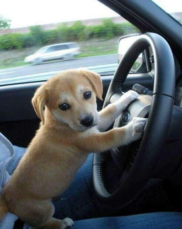 Hop in we're leaving