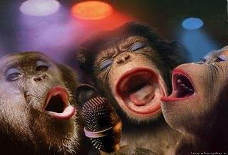 Funny Pictures of Monkeys  Cute Girl Band