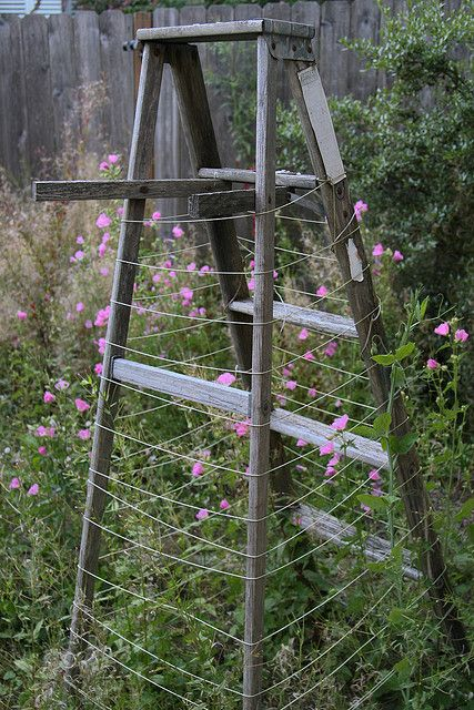 Garden Ladder | Flickr - Photo Sharing!