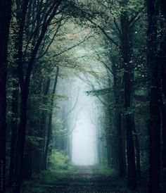 """Your #forest is a fairy tale. (What John Mayer meant to sing in """"Your Body is a Wonderland."""")"""