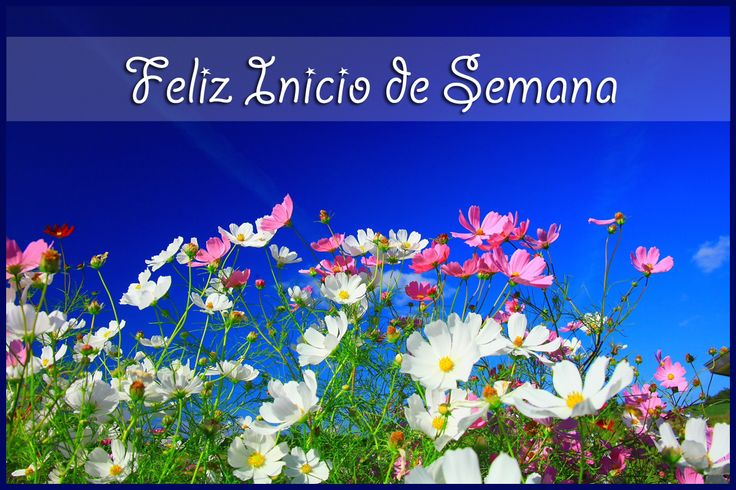 ☺FELIZ INICIO DE SEMANA!!! http://frases-conimagenes.blogspot.com.ar/2012/09/feliz-inicio-de-semana.html