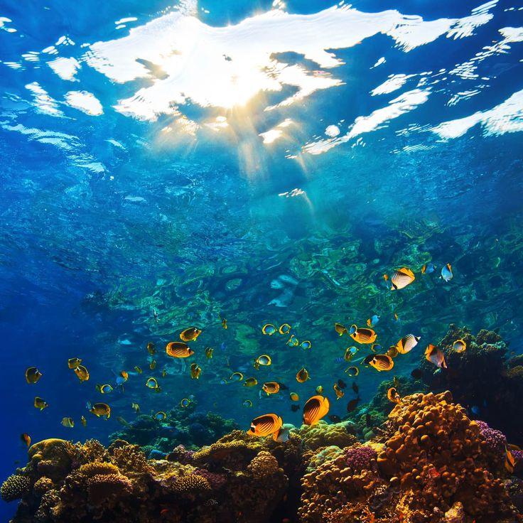 Korallrev tapet | Fototapet | Fiskar | Koraller | Happywall