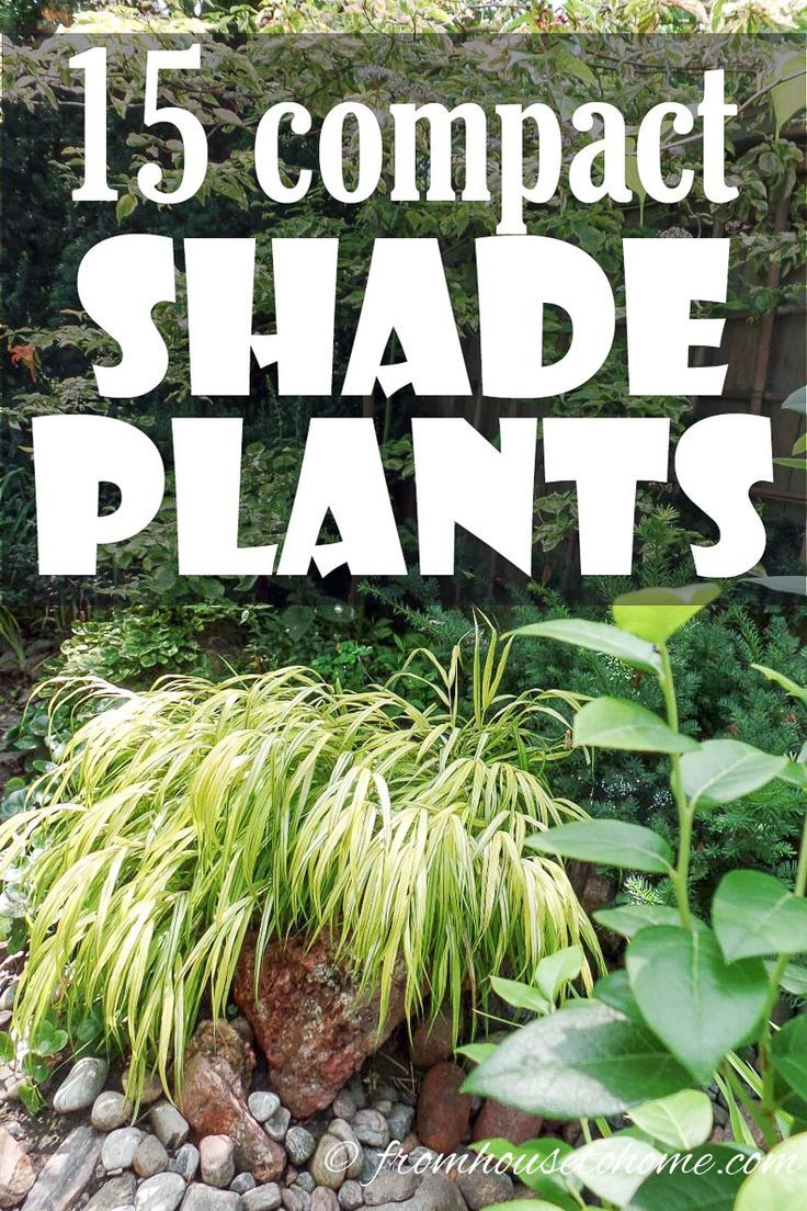 These shade loving perennial ground cover plants are AWESOME! So many pretty flowers that will look great in my backyard shade garden. #shadeplants