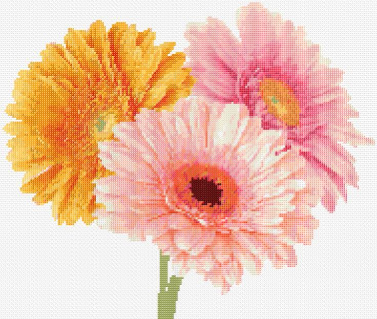 Gerbera daisy free cross stitch pattern