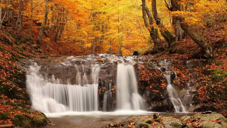 Reasons To Love Fall Fall leaves wallpaper Wallpaper and