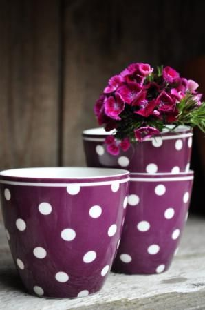 purple dotted cups filled with flowers