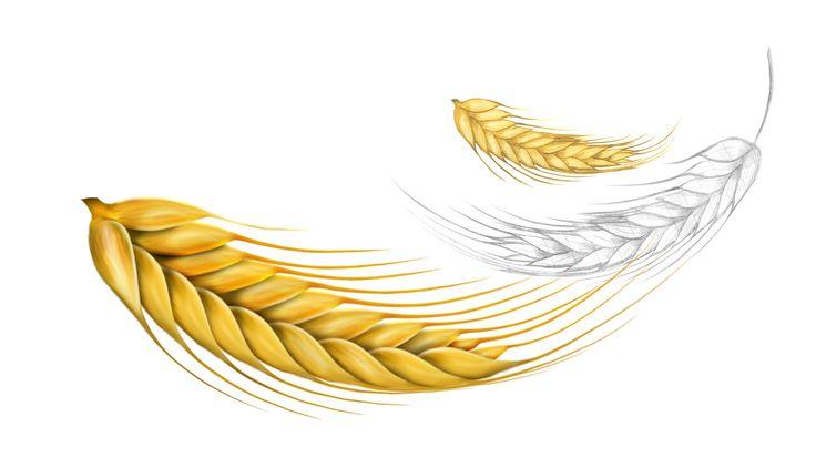 Ilustração Trigo | by Vanderley Godoy #illustration #trigo #wheat #draw #sketch #inspiration #art #ilustração
