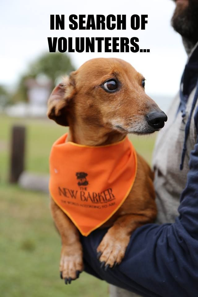 Dog Lovers Dachshund Adoption Rescue And Education Dare Needs