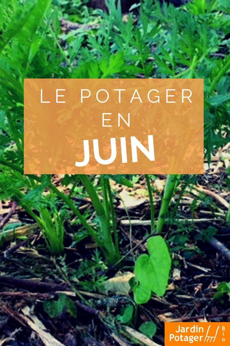 Que Planter En Juin Au Potager Potagerjuin Plan Potager Que Planter En Juin Potager Facile