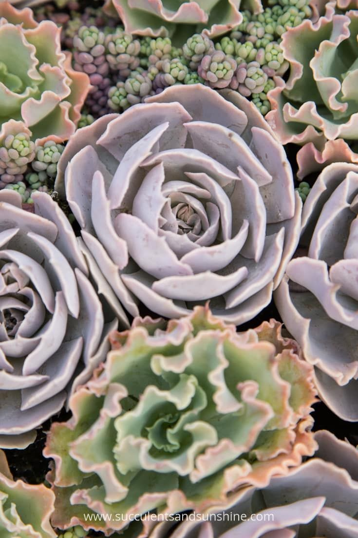 Succulent Dormancy and Active Growing Seasons | Succulents
