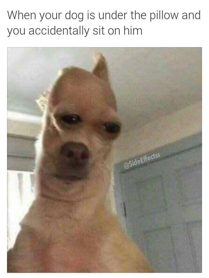Dank Memes Weird Pictures Memes 4