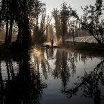 Xochimilco Journal: An Aquatic Paradise in Mexico, Pushed to the Edge of Extinction  -----------------------------   #news #buzzvero #events #lastminute #reuters #cnn #abcnews #bbc #foxnews #localnews #nationalnews #worldnews #новости #newspaper #noticias
