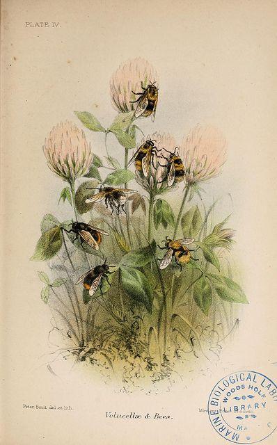 Bee's via Flickr