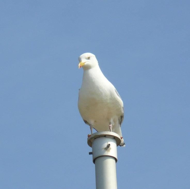 jonathan livingston seagull pdf full