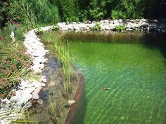 Swimming pond-Natural pool