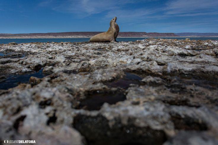 Seal sunbathing in the rocks #josafatdelatoba #cabophotographer #loscabos #bajacaliforniasur #mexico #seal #sunbathing