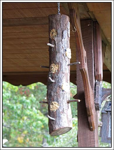 How to Make a Rustic Suet Feeder. Suet attracts Woodpeckers, Nuthatches and Chickadees which will also happily eat any beetles trying to infest your trees!