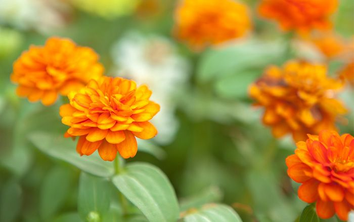 What Does Perennial Biennial And Annual Plants Mean Perennials Flower