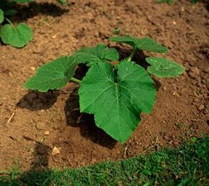 Vegetable Garden, What to grow and how to Grow it. :)
