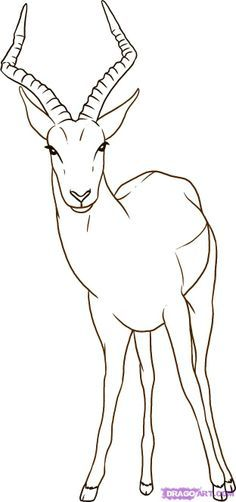 how to draw an impala step by step for kids - Google Search