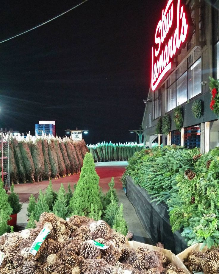 Christmas trees are already being sold at Stew Leonards! Can't wait to put  one up! @stewleonards #StewLeonards #StewLeonardsYonkers #Chris… - Christmas Trees Are Already Being Sold At Stew Leonards! Can't Wait